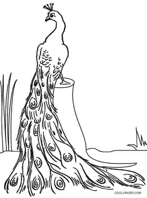 peacock coloring page printable peacock coloring pages for kids cool2bkids page peacock coloring