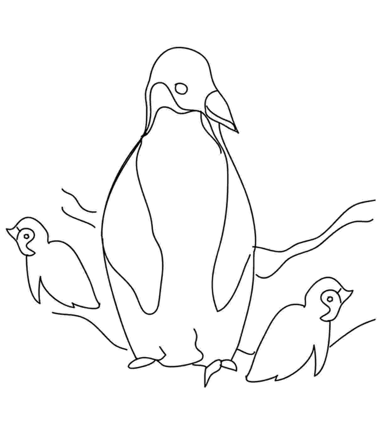 penguin color sheet penguin template animal templates free premium templates sheet penguin color