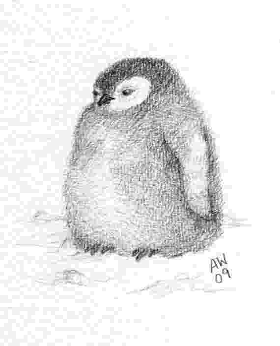 penguin sketch how to draw a penguin in a few easy steps easy drawing sketch penguin