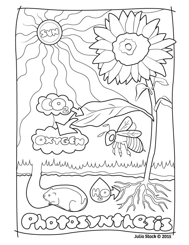 photosynthesis coloring sheet julia stack drawbones medical illustration photosynthesis sheet coloring