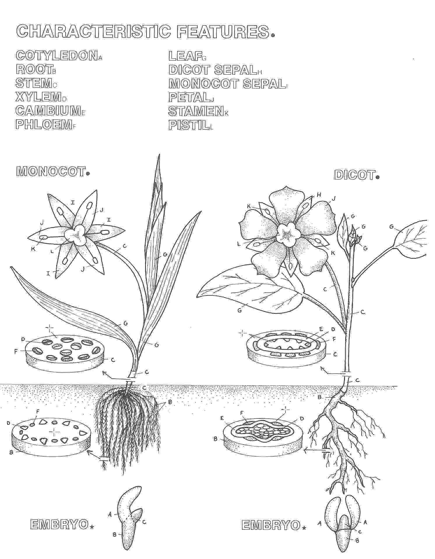 photosynthesis coloring sheet photosynthesis drawing at getdrawingscom free for sheet coloring photosynthesis