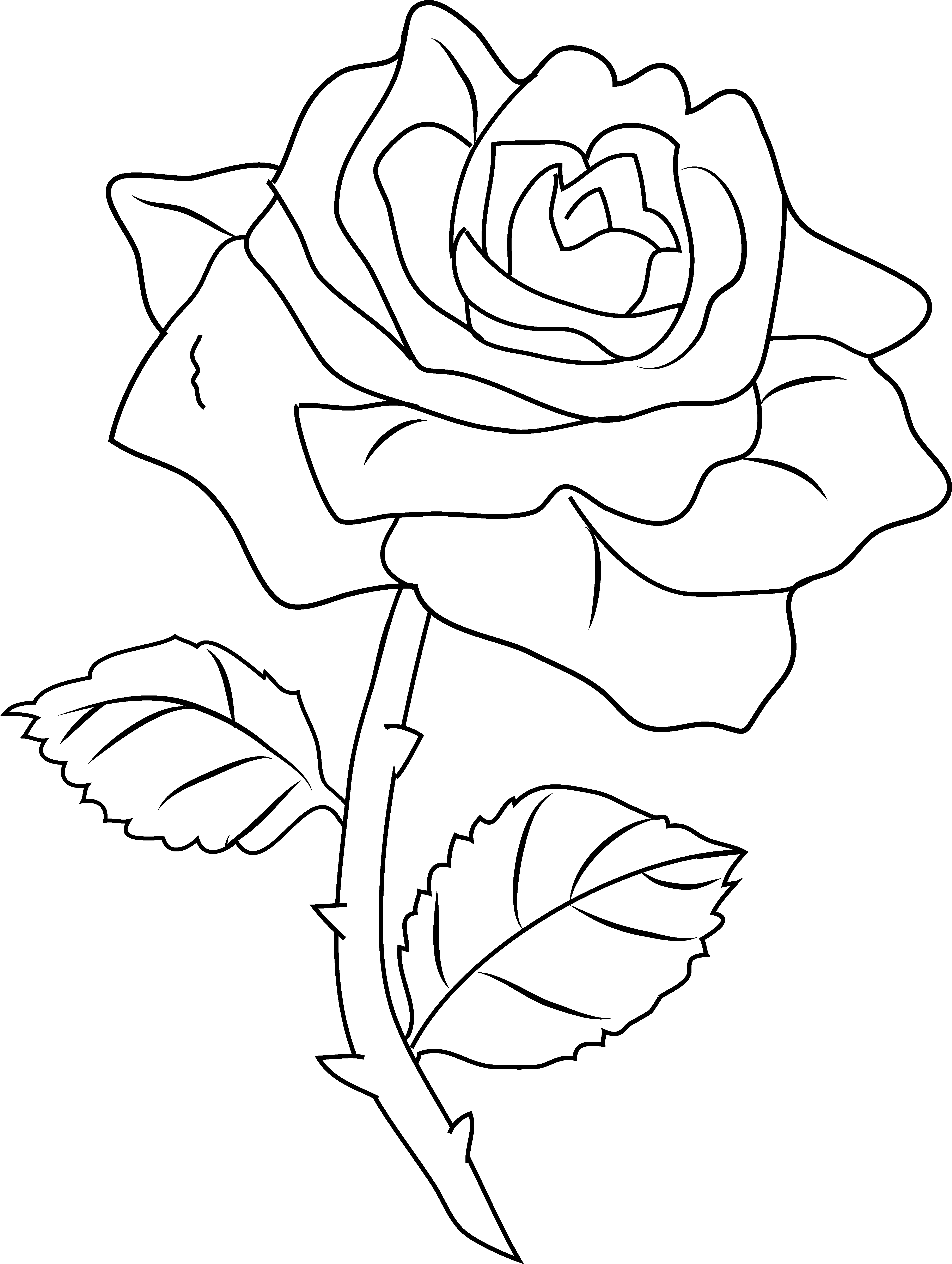 pics of roses to color 271 best images about rose art coloring pages on pics to color of roses