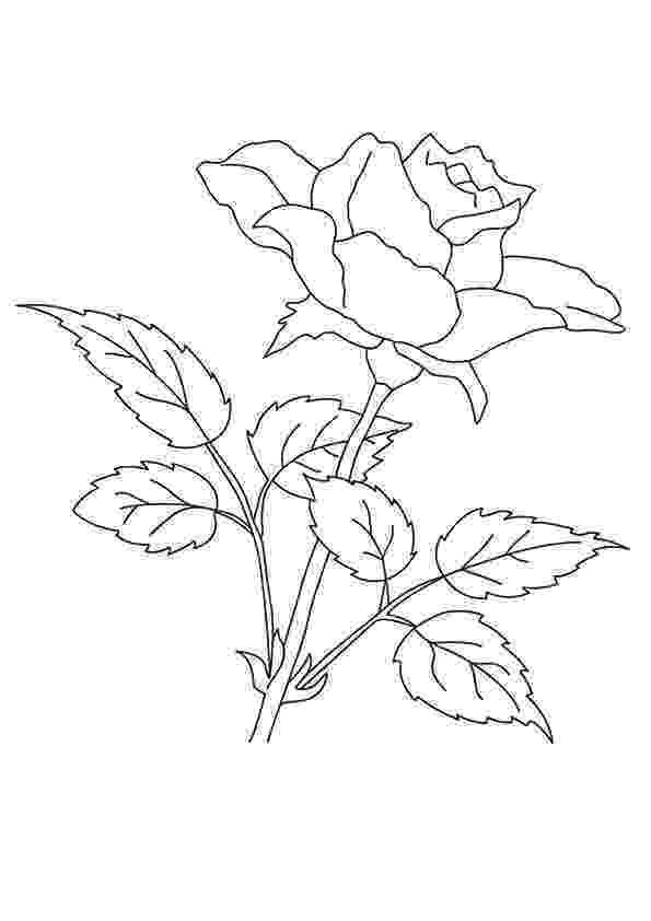 pics of roses to color free printable flower coloring pages for kids best color pics of roses to