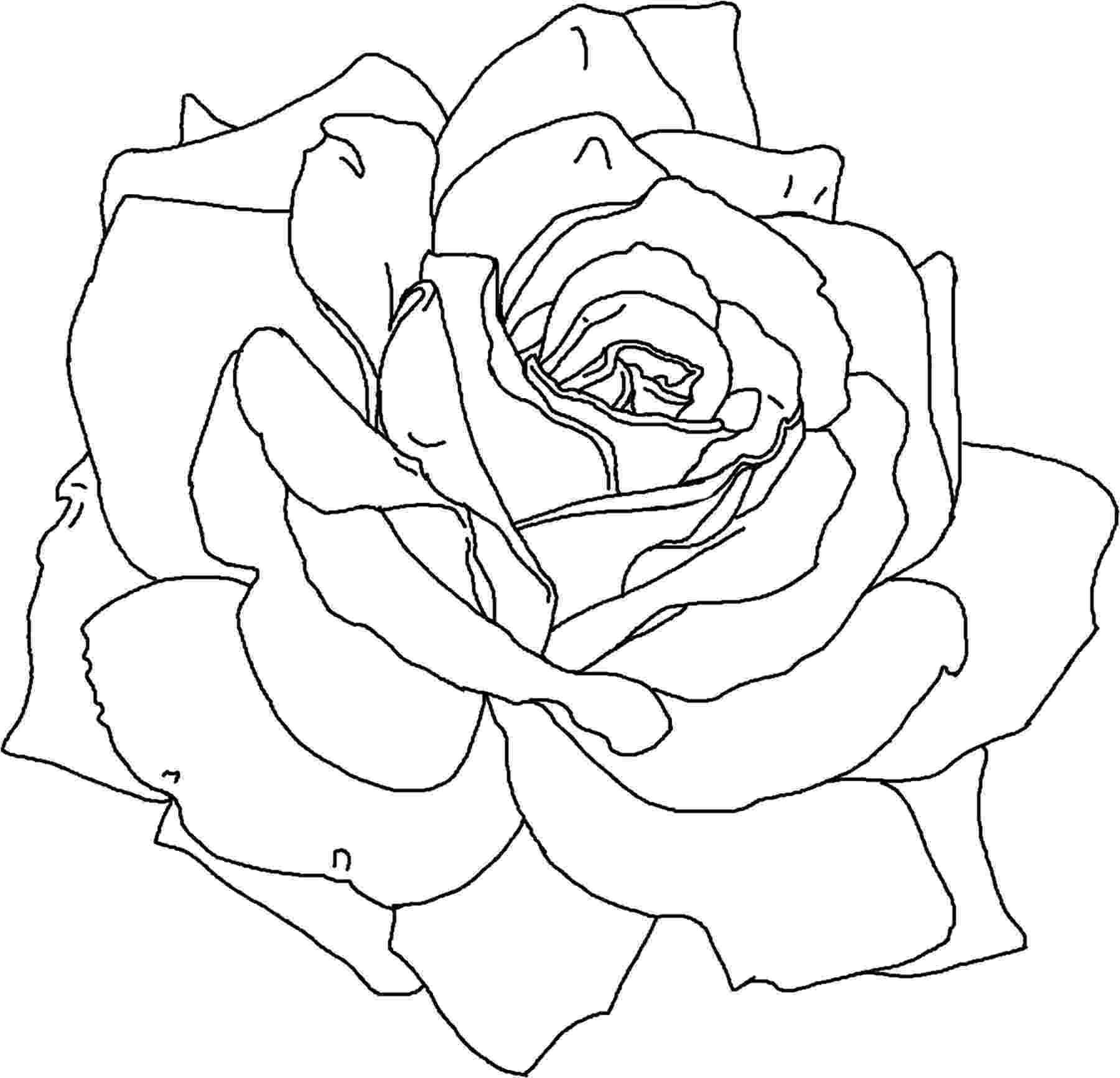 pics of roses to color free printable flower coloring pages for kids best pics color to roses of