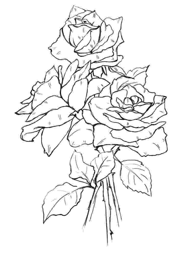 pics of roses to color free printable flower coloring pages for kids best pics of roses to color