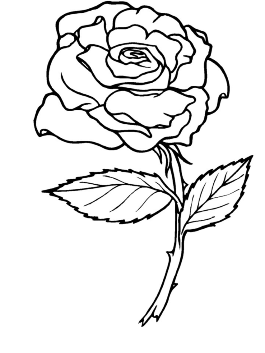 pics of roses to color free printable roses coloring pages for kids rose roses color of pics to