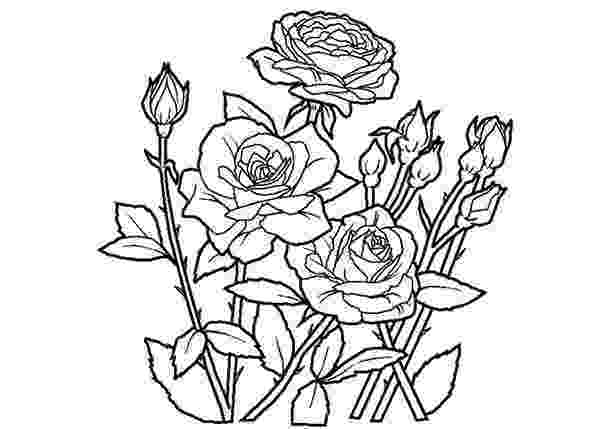 pics of roses to color free printable roses coloring pages for kids to of color roses pics