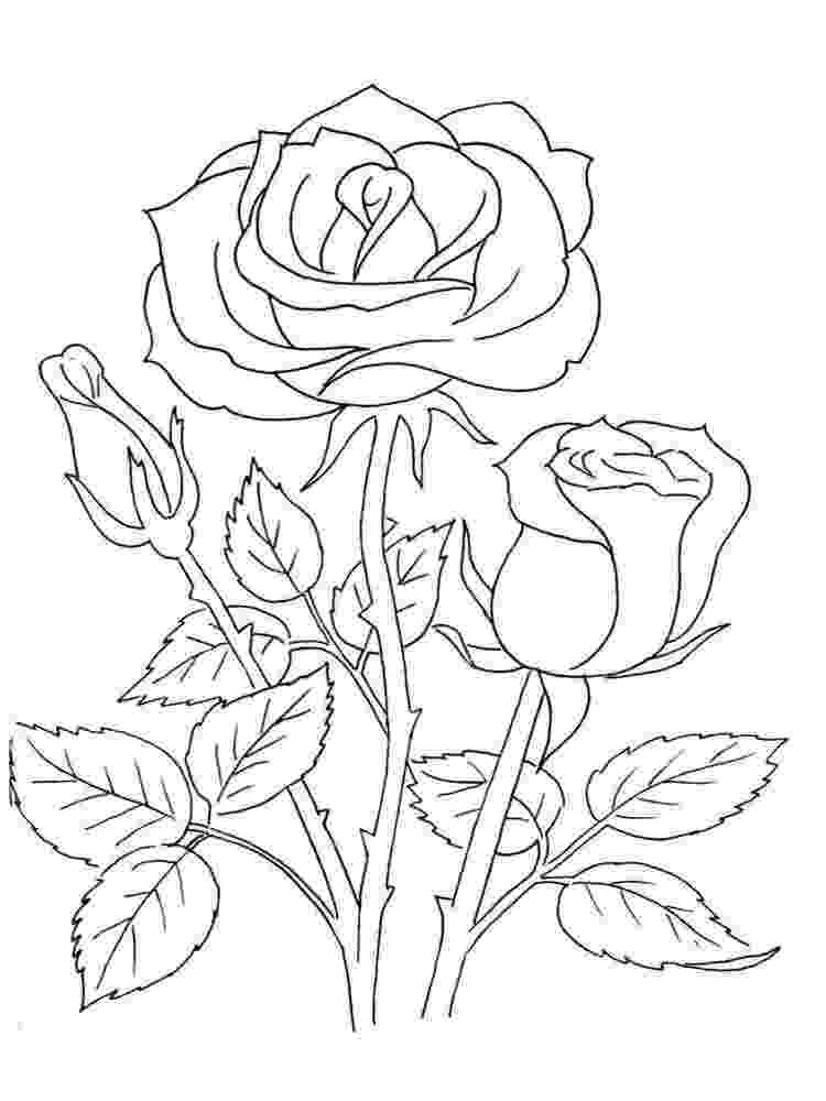 pics of roses to color printable rose coloring pages for kids cool2bkids of to pics color roses