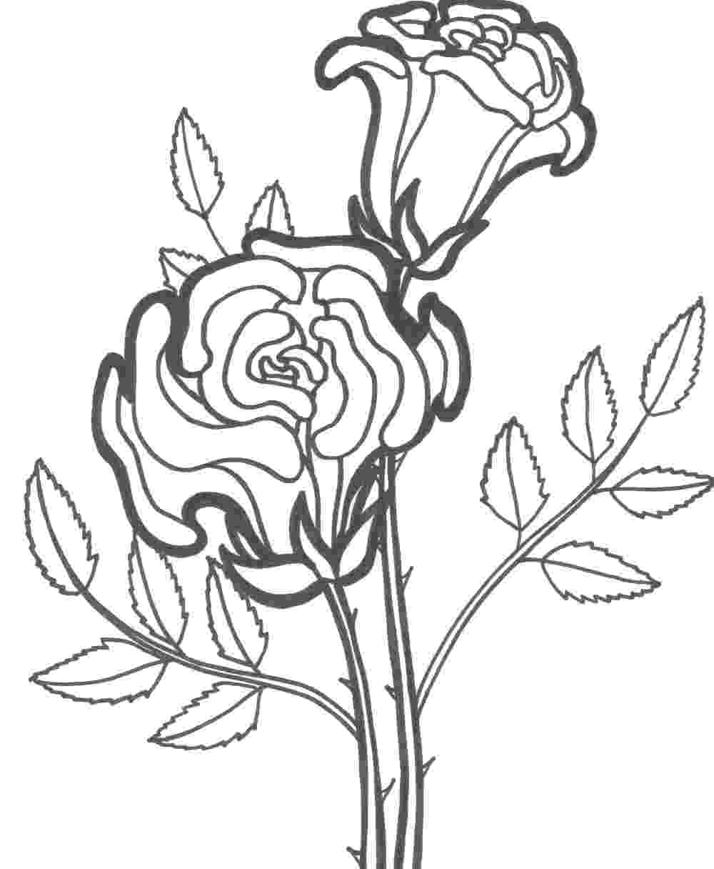 pics of roses to color roses coloring pages to download and print for free color of to roses pics