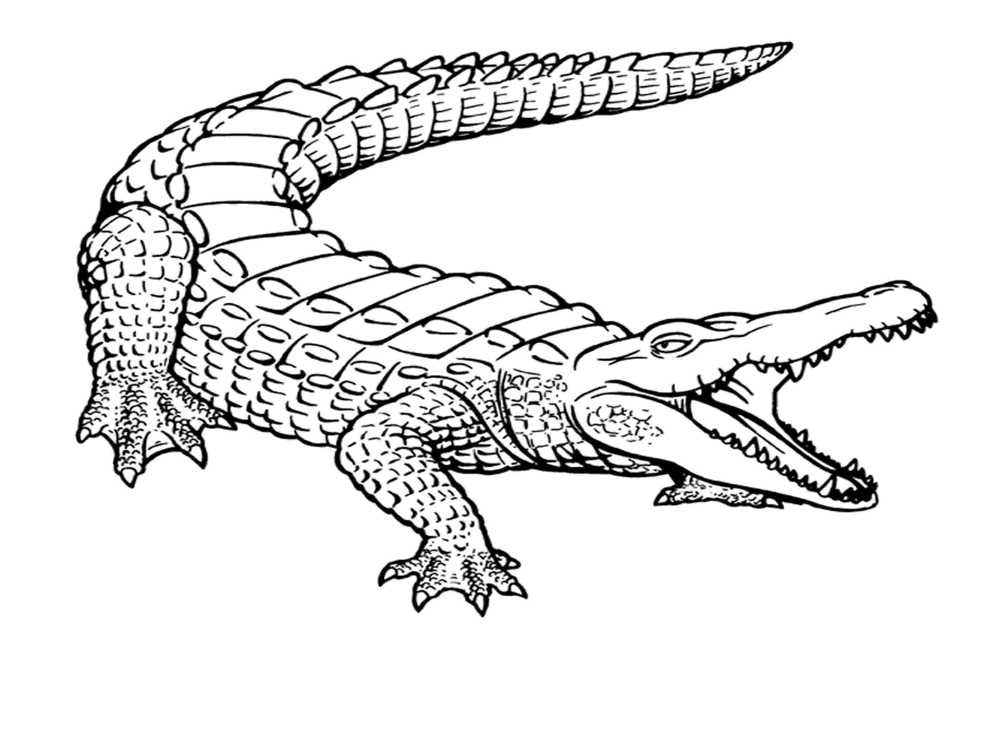 picture of a crocodile to colour free printable crocodile coloring pages for kids a of colour to crocodile picture