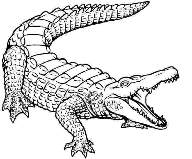 picture of a crocodile to colour resultado de imagen para cocodrilo dibujo plantilla to a picture crocodile colour of