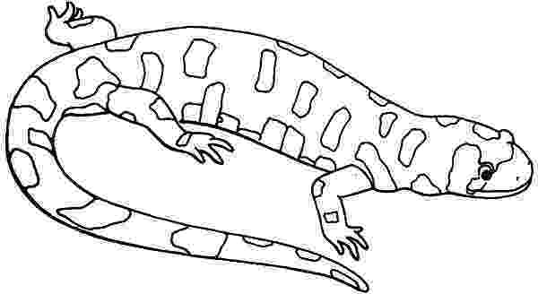 picture of a lizard to color cartoon lizard coloring pages download print online lizard a picture of color to