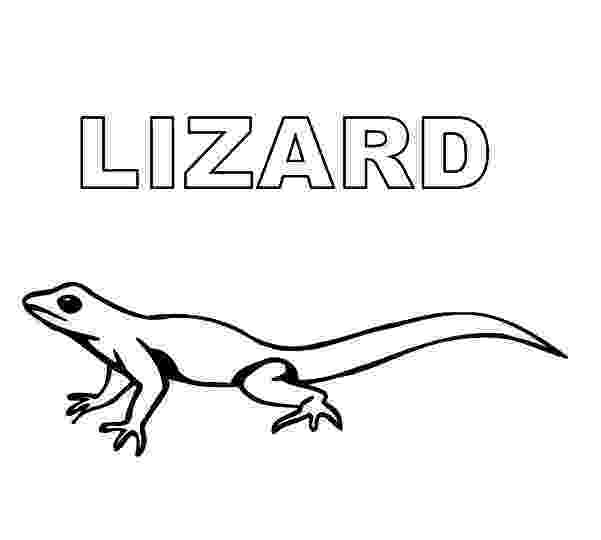 picture of a lizard to color free printable lizard coloring pages for kids animal place color of to lizard picture a
