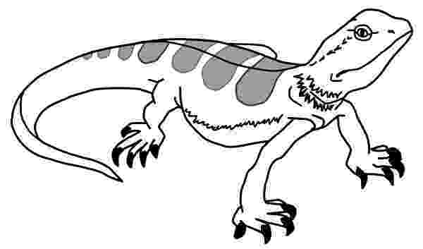 picture of a lizard to color little lizard cartoon coloring page stock illustration lizard of color a picture to