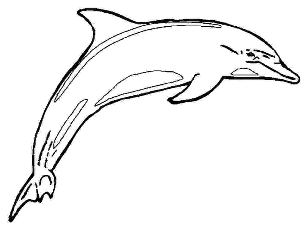 picture of dolphins to color leaping dolphins coloring page educationcom of color picture dolphins to
