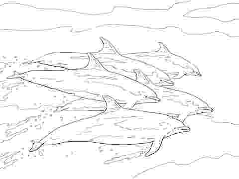picture of dolphins to color top 9 cute dolphin colouring pages for free printable to picture dolphins color of