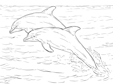 picture of dolphins to color two dolphins in the ocean dolphins adult coloring pages color to dolphins of picture