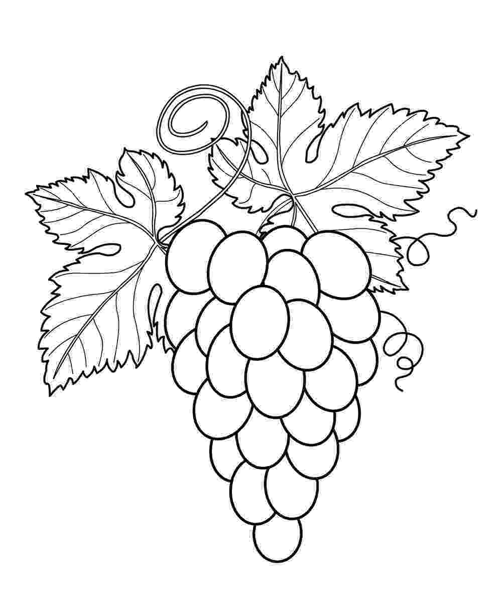 picture of fruits for colouring get this online fruit coloring pages 61145 colouring picture fruits for of