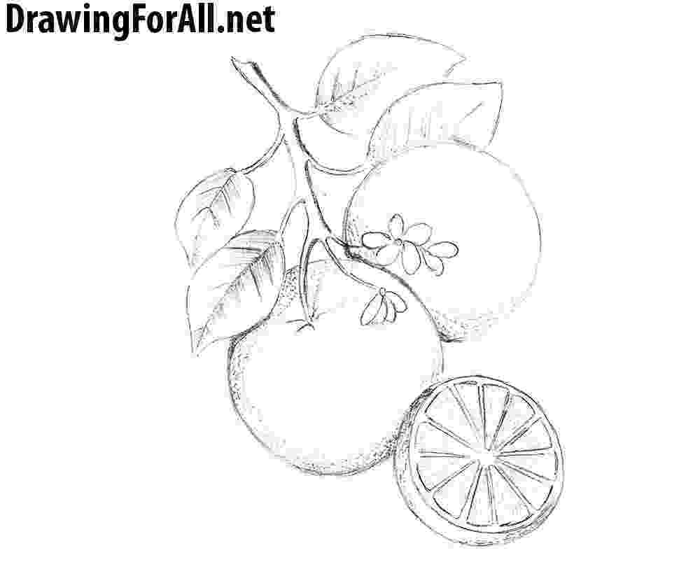 picture of oranges five oranges clipart etc picture oranges of