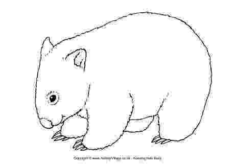 pictures of australian animals printable australian animals colouring pages brisbane kids pictures of printable australian animals
