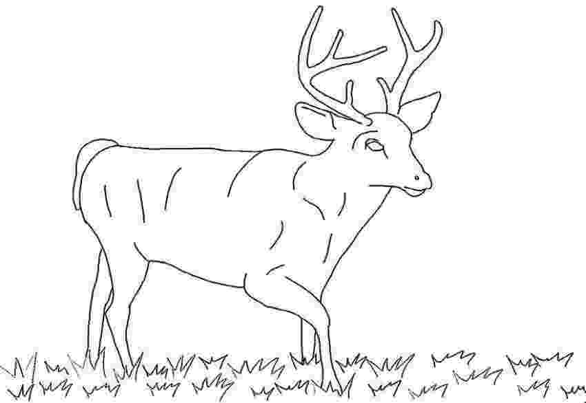 pictures of deers to color deer coloring pages coloring pages to print of deers to pictures color