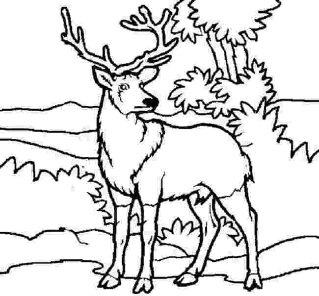 pictures of deers to color free printable deer coloring pages for kids pictures deers color to of