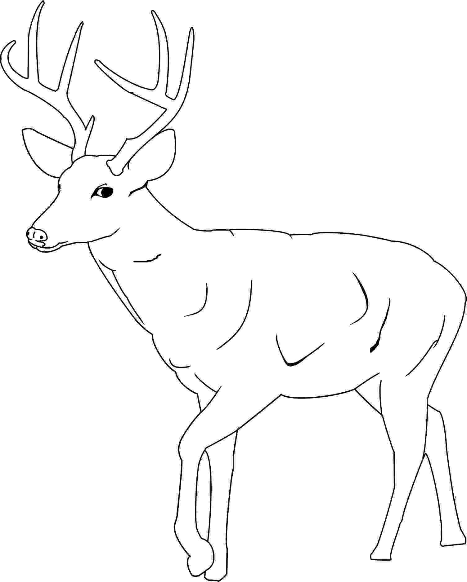 pictures of deers to color top 20 deer coloring pages for your little ones color pictures deers to of