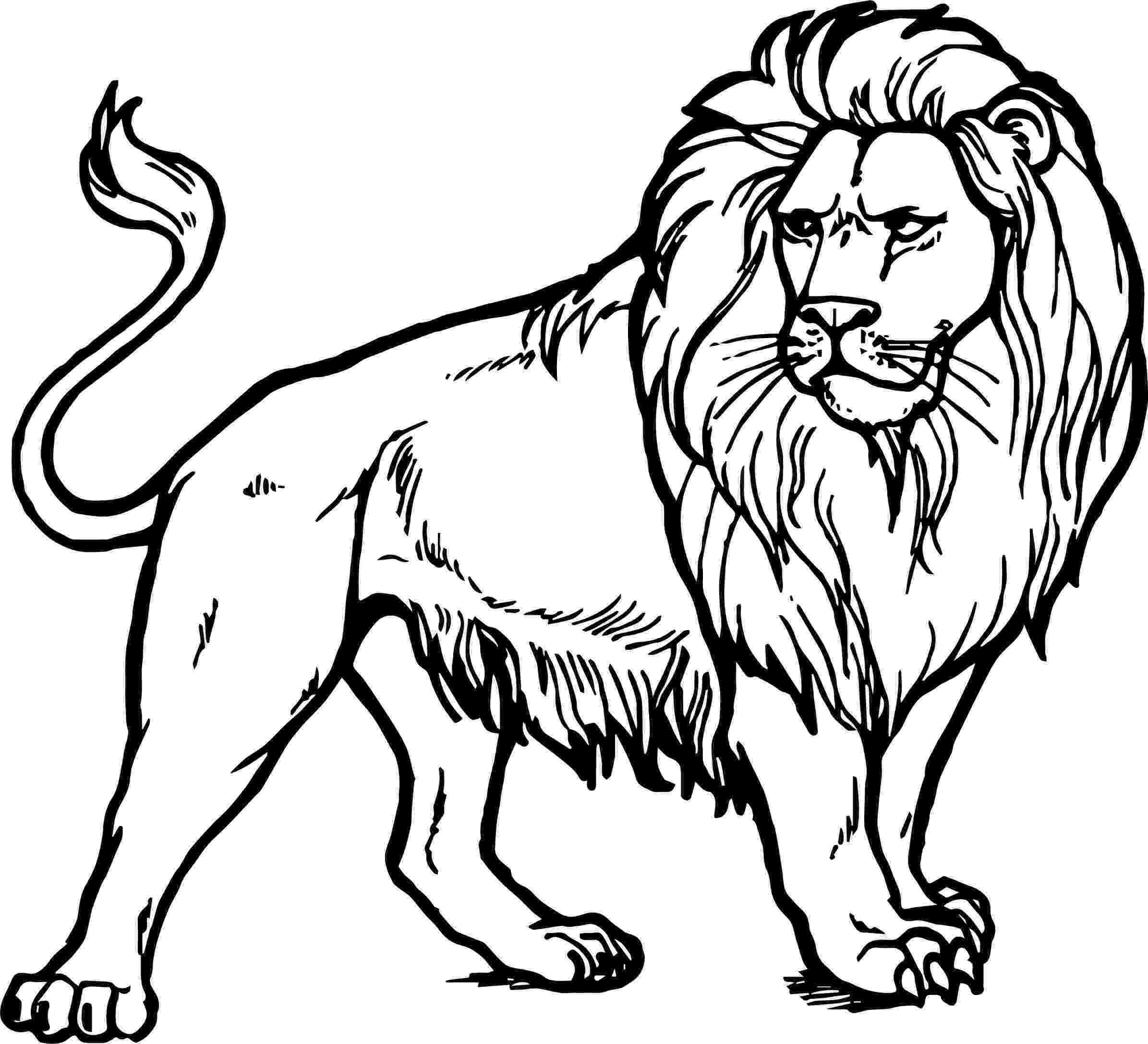 pictures of lions to color about lions to lions color of pictures