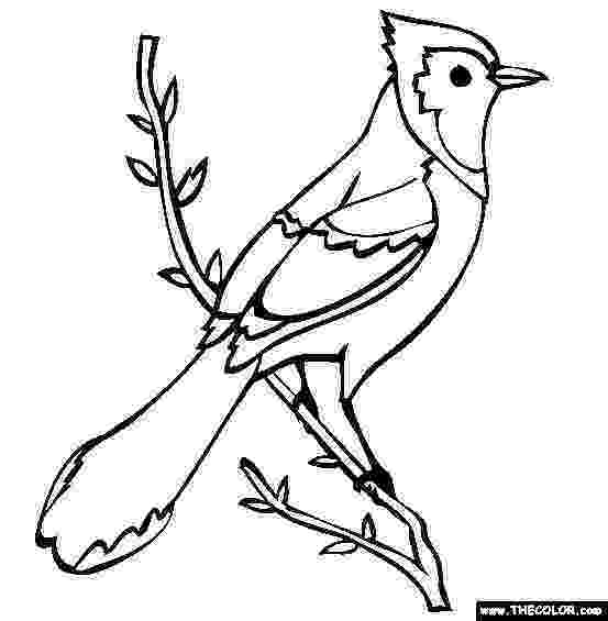 pictures of parrots to colour bird to color blue jay coloring page free blue jay to of colour pictures parrots