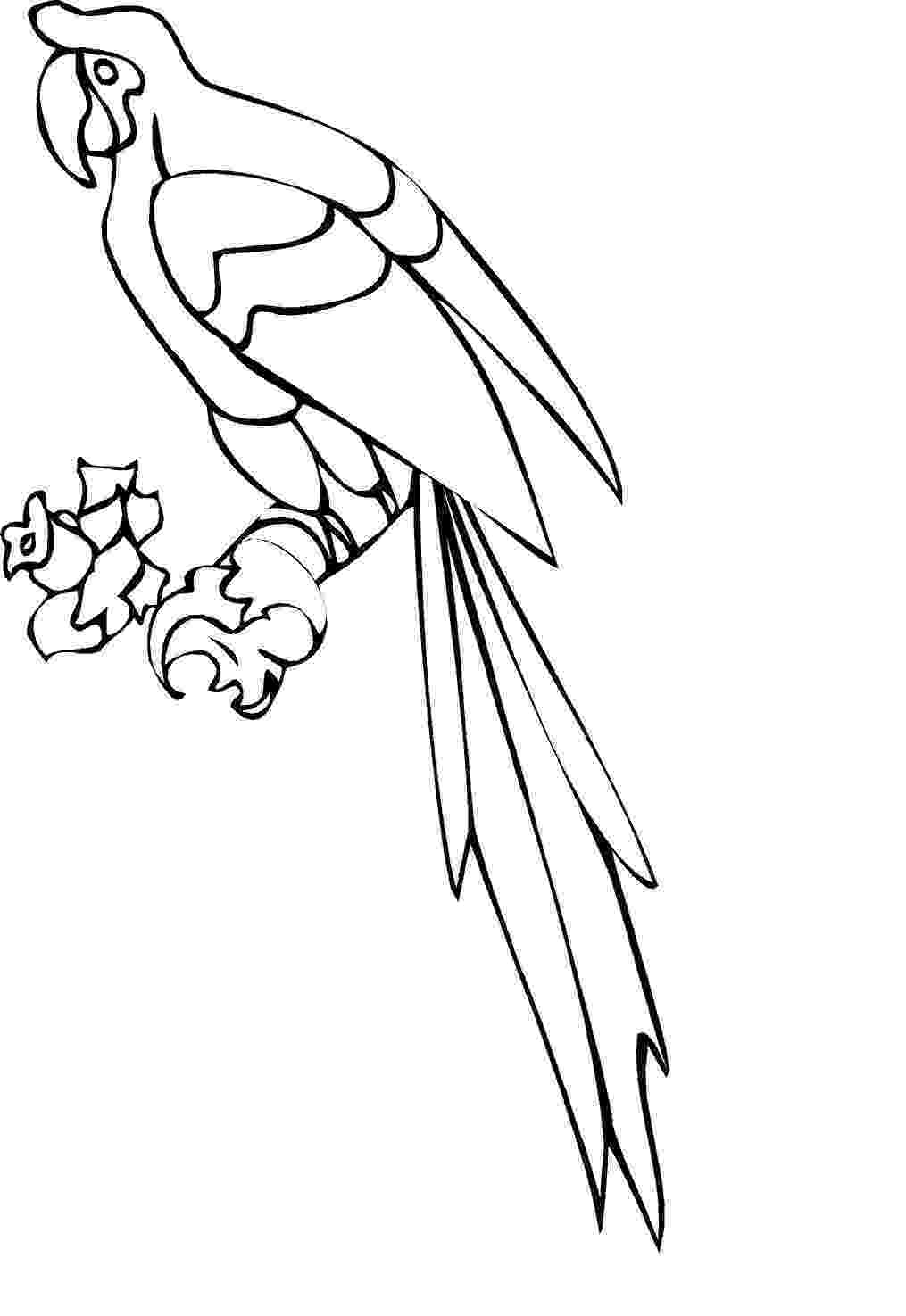 pictures of parrots to colour free printable parrot coloring pages for kids animal place colour pictures of parrots to