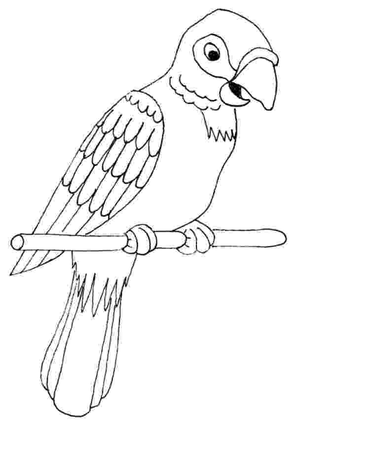 pictures of parrots to colour free printable parrot coloring pages for kids animal place parrots colour of to pictures