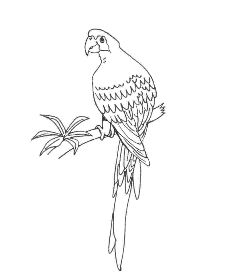 pictures of parrots to colour free printable parrot coloring pages for kids animal place parrots pictures colour to of