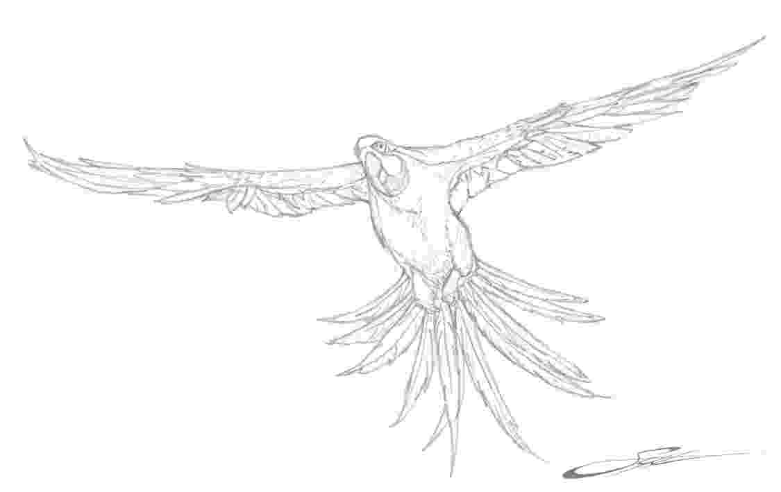 pictures of parrots to colour free printable parrot coloring pages for kids pictures colour to parrots of