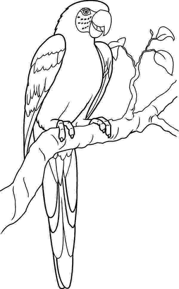 pictures of parrots to colour lovely parrot coloring page download print online pictures colour of to parrots