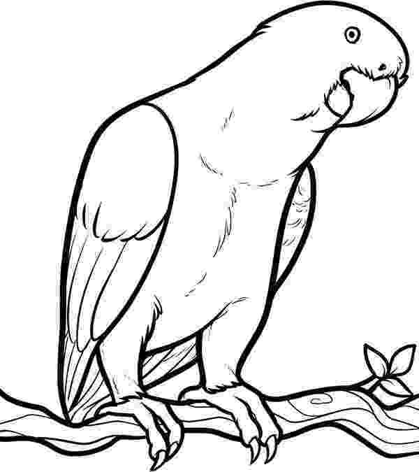 pictures of parrots to colour parrot looking for food coloring page bird coloring parrots colour to of pictures