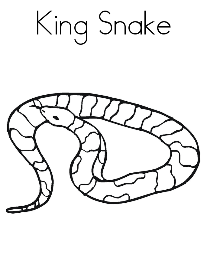 pictures of snakes to color coloring pages of snakes coloring home pictures of color snakes to