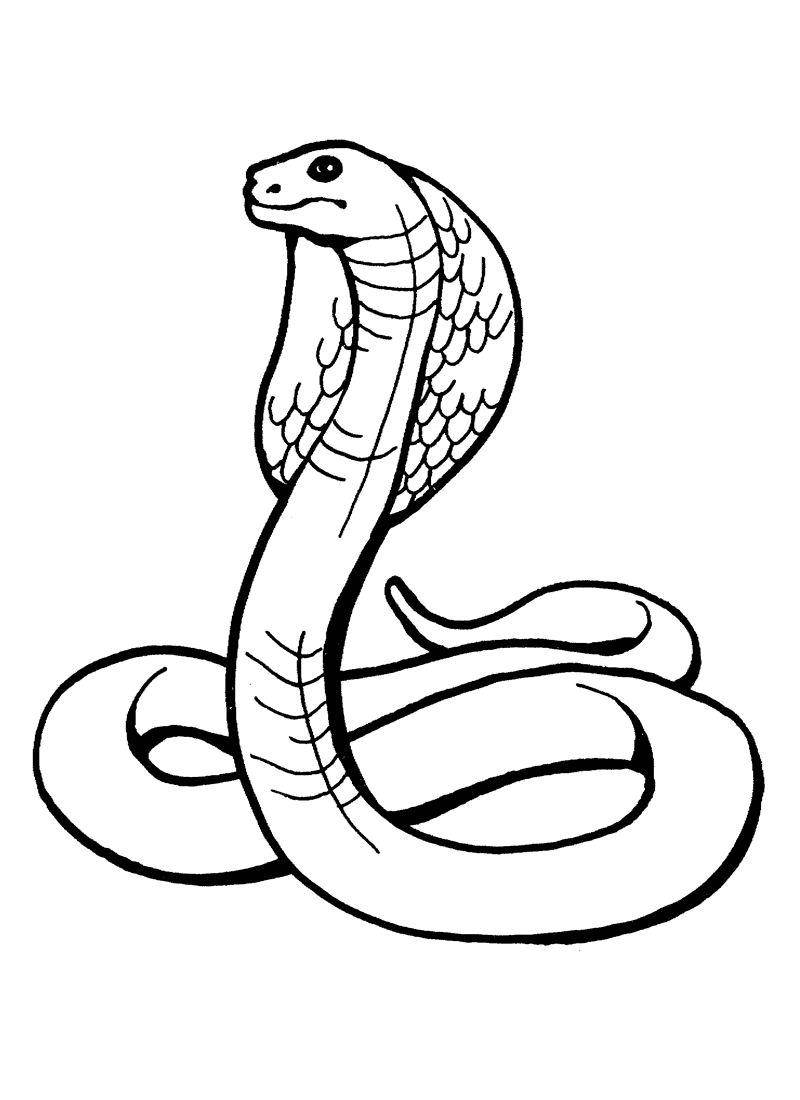 pictures of snakes to color free printable snake coloring pages for kids pictures snakes to of color
