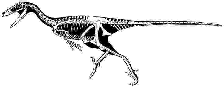 pictures of troodon dinosaur chapter 2 donna the troodon cute but dangerous dinosaur pictures of troodon