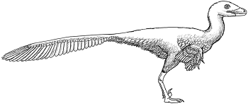 pictures of troodon dinosaur dinosaur coloring pages kids dig dinos of dinosaur pictures troodon