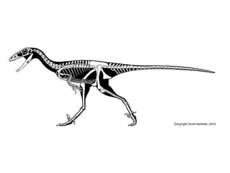 pictures of troodon dinosaur learn how to draw a troodon dinosaurs step by step pictures troodon of dinosaur