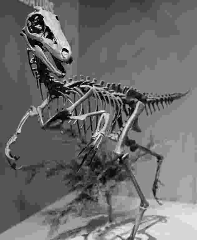 pictures of troodon dinosaur troodon simple english wikipedia the free encyclopedia troodon dinosaur pictures of