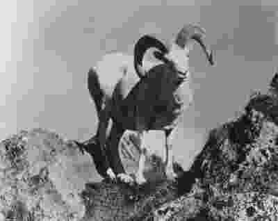 pictures of tundra animals alaska regional profiles northwest region kotzebue tundra of pictures animals