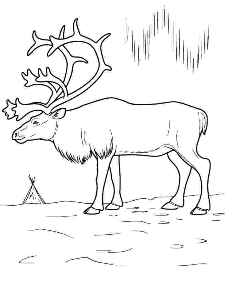 pictures of tundra animals arctic tundra pages coloring pages tundra of pictures animals