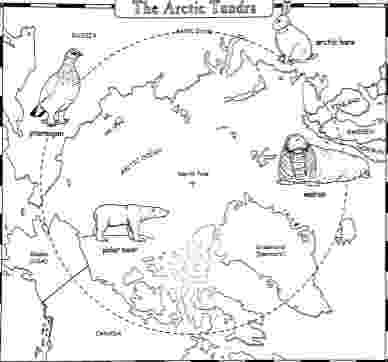 pictures of tundra animals arctic worksheet math few activities using a map of the tundra of pictures animals