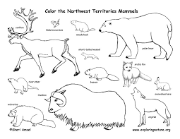 pictures of tundra animals awesome ideas tundra animals coloring pages arctic animal animals of pictures tundra