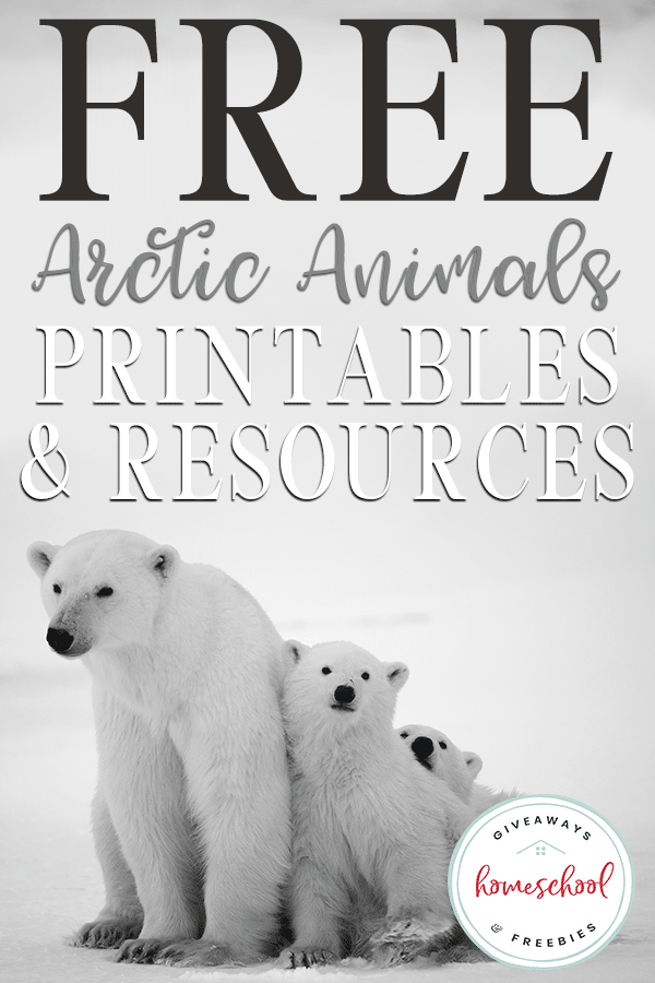 pictures of tundra animals free arctic animals printables and resources homeschool tundra pictures animals of