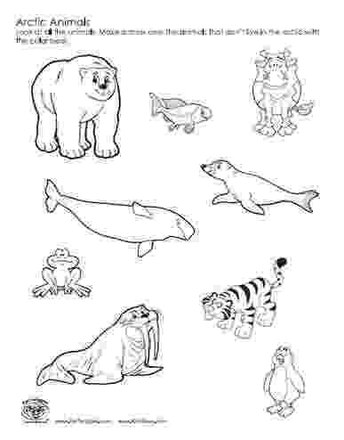 pictures of tundra animals polar arctic animals coloring pages sketch coloring page animals of tundra pictures