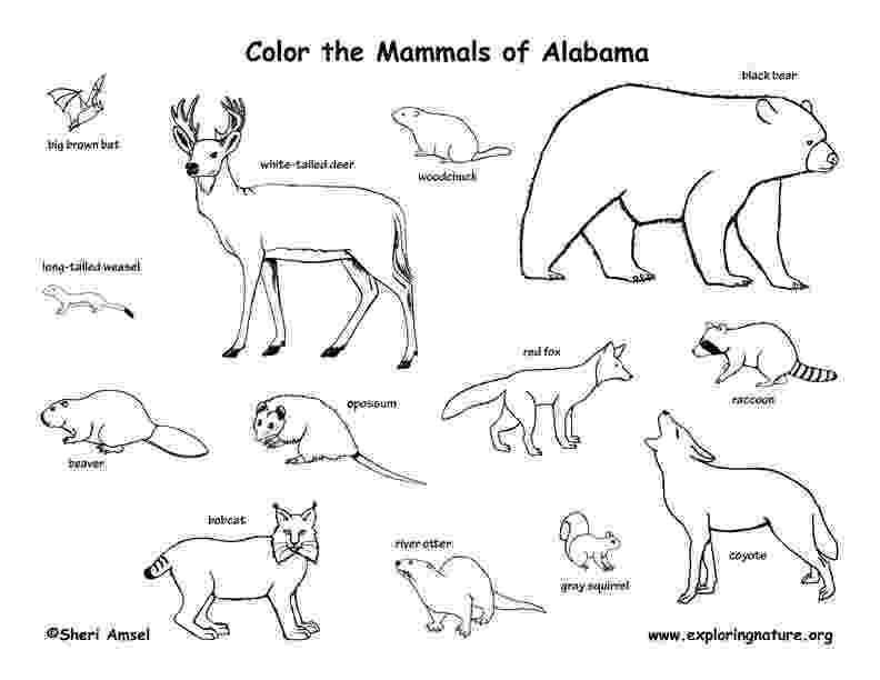 pictures of tundra animals tundra animals drawing at getdrawings free download pictures animals of tundra