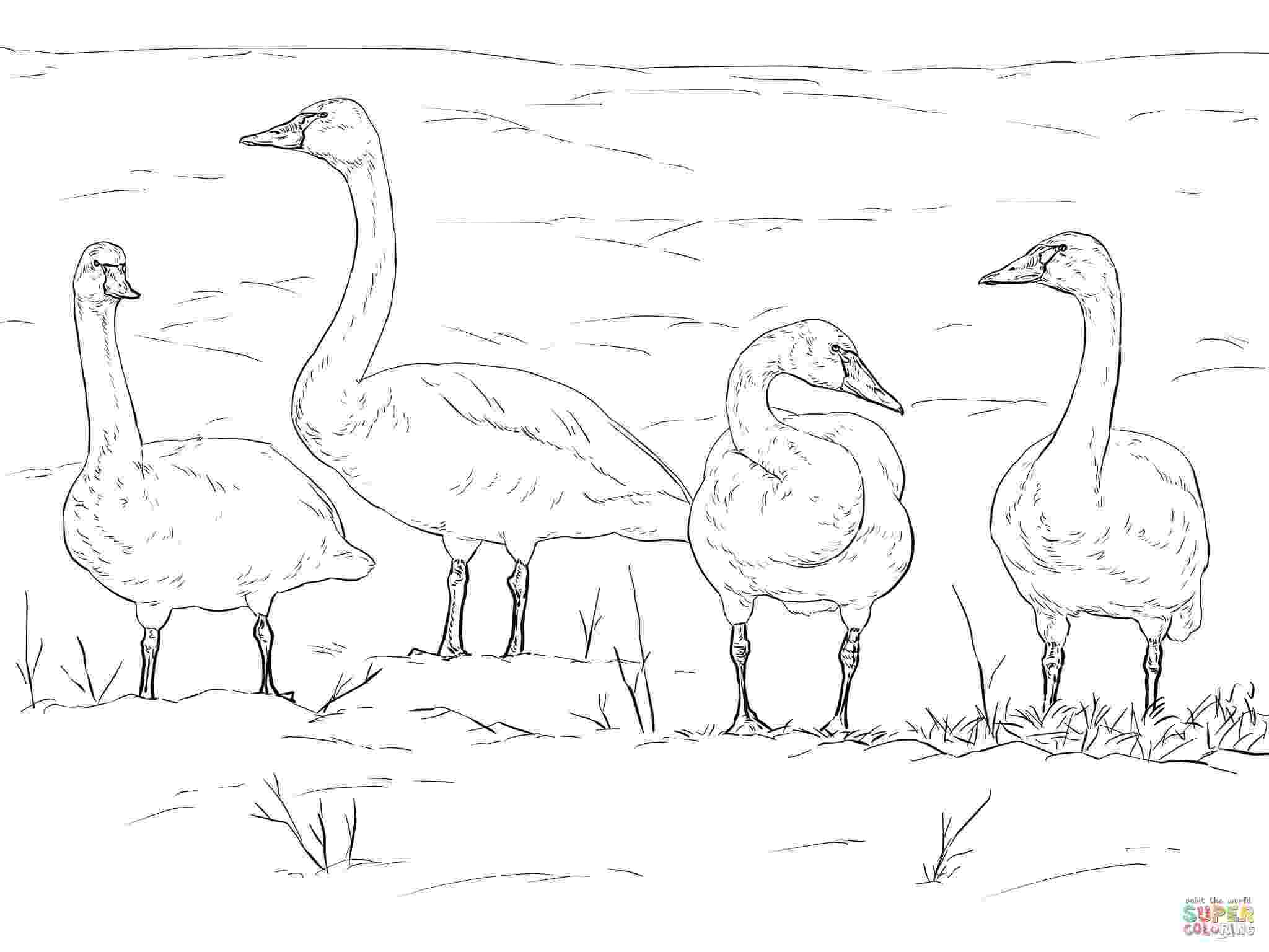 pictures of tundra animals tundra animals drawing at getdrawingscom free for tundra animals of pictures
