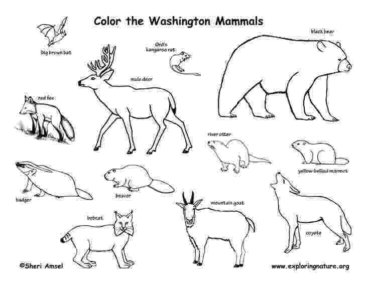 pictures of tundra animals tundra drawing at getdrawingscom free for personal use tundra animals of pictures